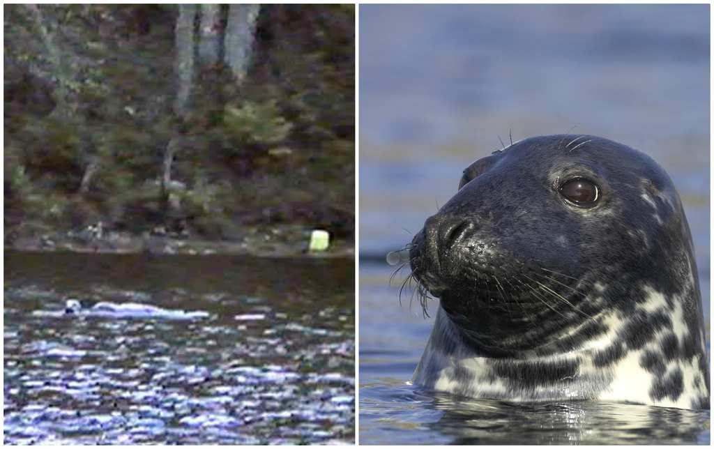 Loch Ness Monster Experts Two New Sightings Are Reported Within