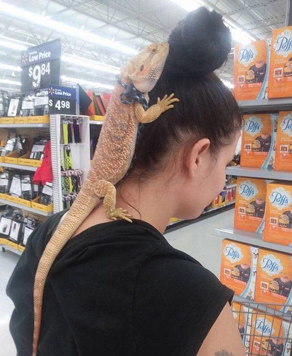 walmart-lizard
