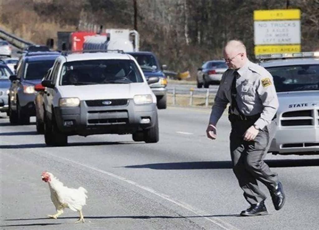 Funny Chicken Police